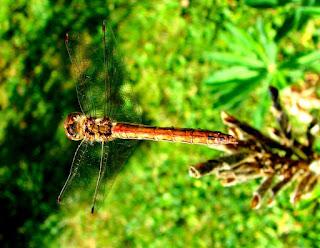 Insekten, insekte, insektet, intsektuak, insekti, Насекоми, insekter, insects, Putukad, Hyönteiset, insectes, έντομα, serangga, feithidí, skordýr, insetti, ensèk