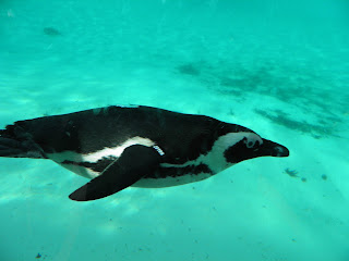 Penguin Beach - ZSL London Zoo