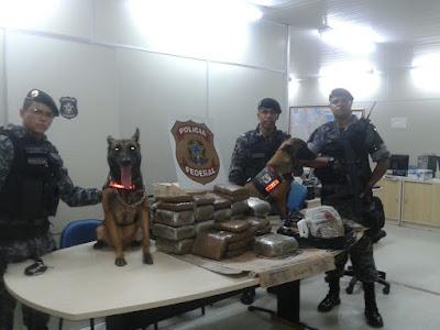 Companhia Independente de Policiamento com Cães (CPE/CIPCães) em apoio a Polícia Federal do Amazonas apreendeu aproximadamente 33 kg de skank