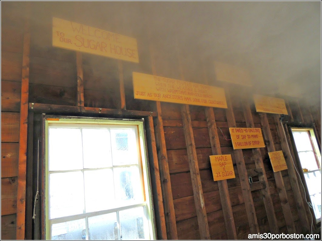 Maple Sugar Season en Massachusetts: Sugar House de Hollis Hills Farm