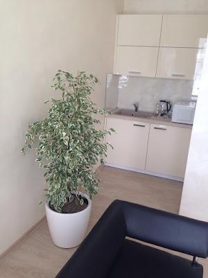 обслуживание растений, лечение растений