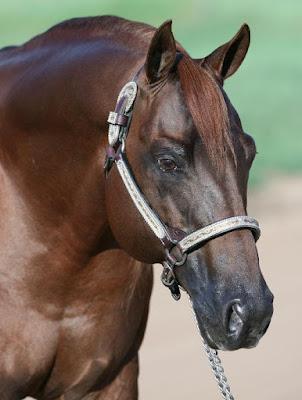http://loomisreininghorses.com/STALLIONS/Topsail-Whiz