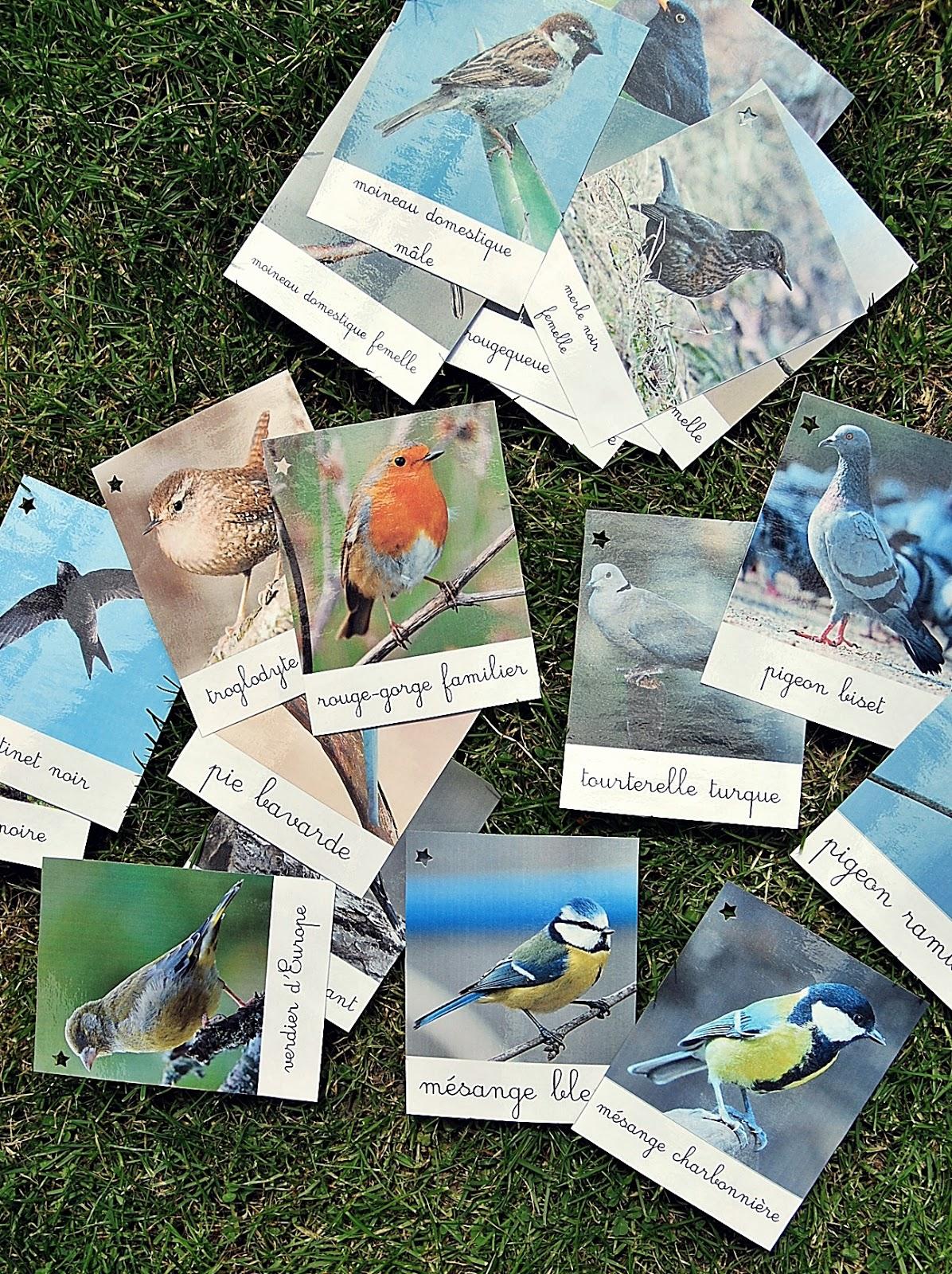 o es tu coquelipop cartes de nomenclature les oiseaux. Black Bedroom Furniture Sets. Home Design Ideas