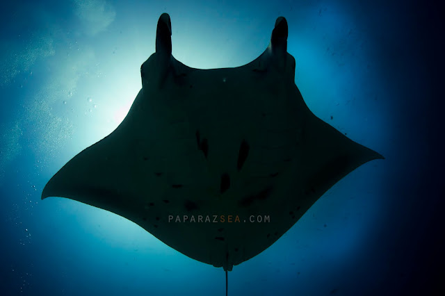 Scuba Diving, Underwater Photography, Learn Scuba, Paparazsea