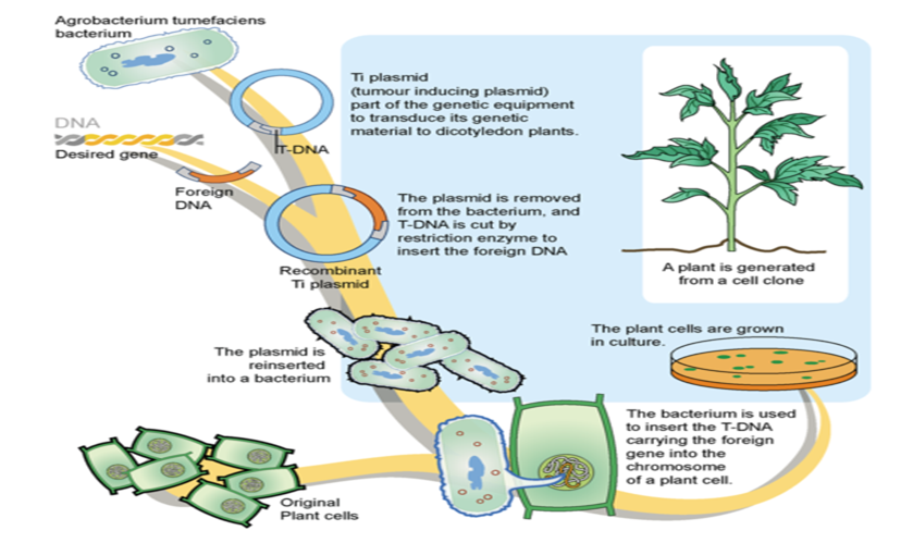 biotechnology in agriculture - photo #18