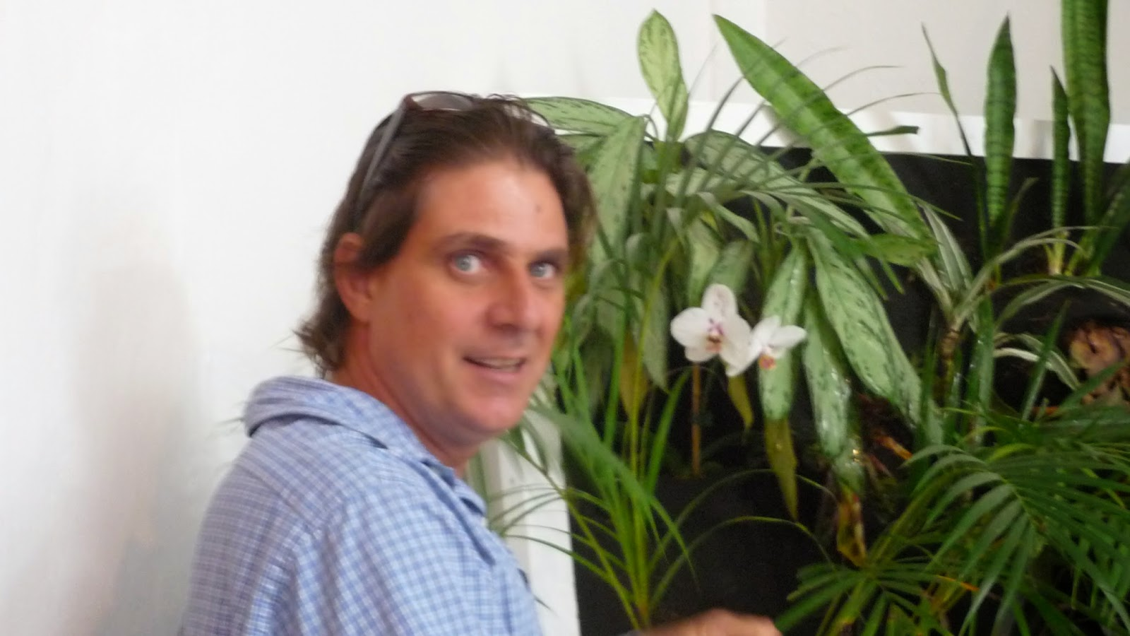 "Ricardo Gil ""Encuentro Tropical"" Organic Arte"