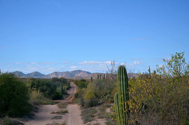 The Road Less traveled. Wonderful country side and the Baja desert is so green. Road back from Playa Santa Ines