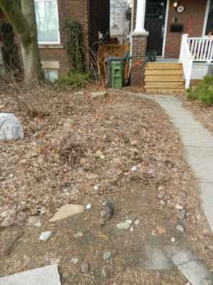 Toronto Spring Cleanup Riverdale Front Yard Before by Paul Jung Gardening Services--a Toronto Gardening Company