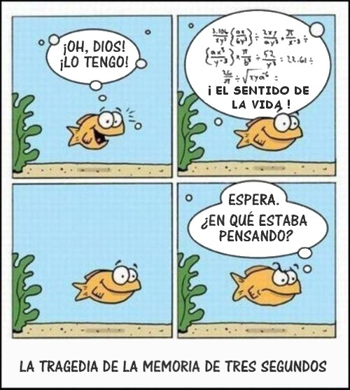 humor grafico el sentido de la vida the meaning of life