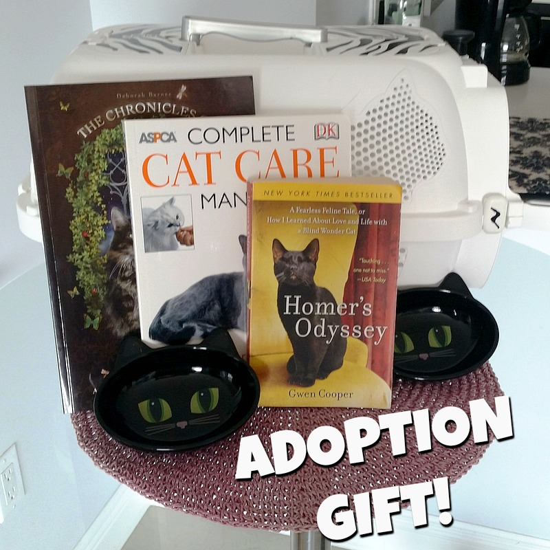 Riverfront cats downtown miami for adoption ray ray kitten with the adoption fee is normally 85 per kitten but adopt both kittens for one fee and when you adopt rr you also receive this lovely adoption kit solutioingenieria Gallery