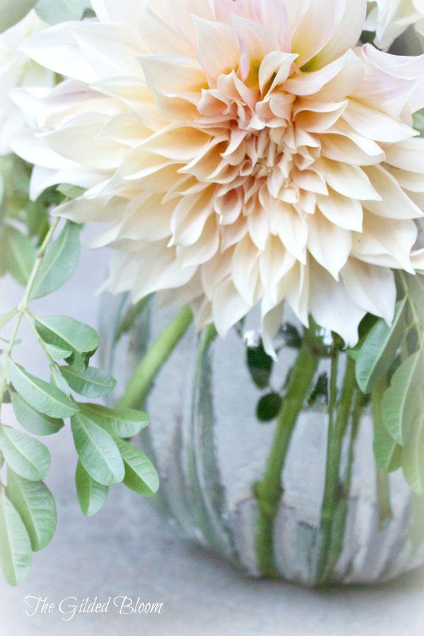 Cream Cafe au Lait Dahlia www.gildedbloom.com #flowers #dahlias