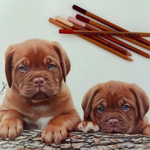 06-Liran-Vardiel-Animal-Drawings-using-Colored-Pencils-www-designstack-co