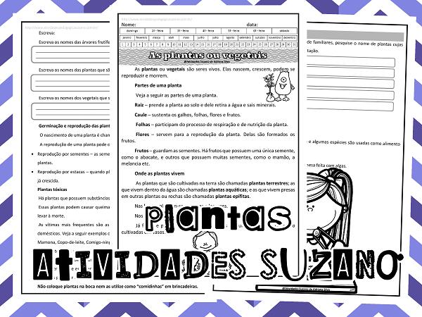 ciencias-atividades-suzano-plantas-vegetais-atividades-pesquisa