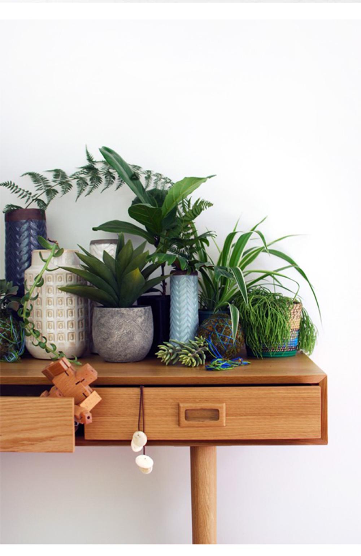 decorare gli interni con le piante