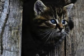 Jak wspomagać antybiorykoterapię u kotów.