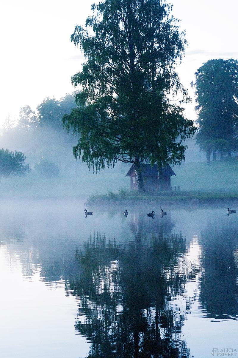 uttersberg dimma fog dusk skymning sommarkväll sommarnatt sjö kanadagäss kanadagås kanada gäss gås