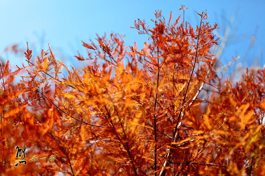 奧萬大國家森林遊樂區|南投仁愛鄉賞楓景點|南投賞楓|台灣賞楓熱門景點