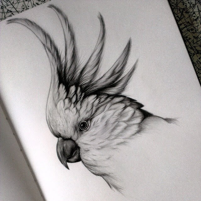 06-Parrot-Cockatoo-Kerry-Jane-Detailed-Black-and-White-Wildlife-Drawings-www-designstack-co