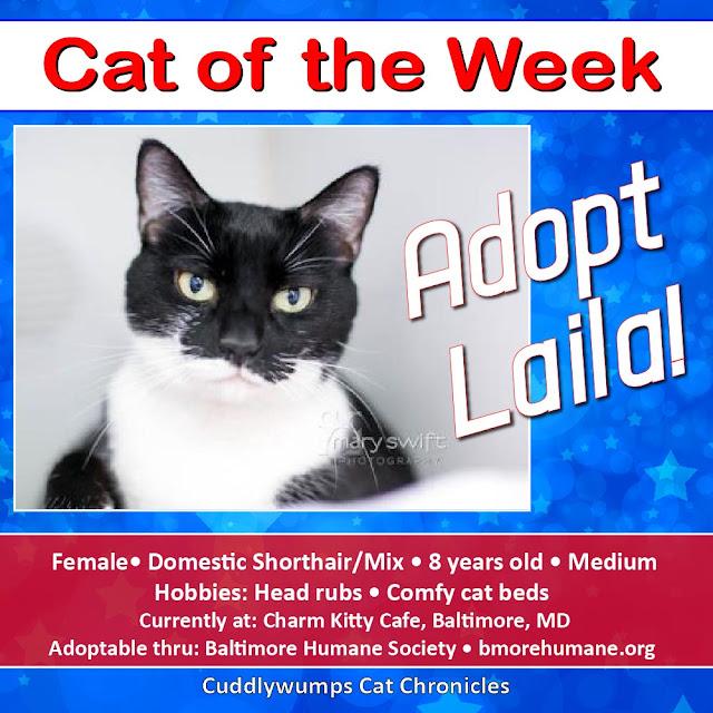 #adoptablecat #blackandwhitecat #adoptdontshop #baltimorehumane