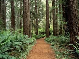 A Árvore Útil