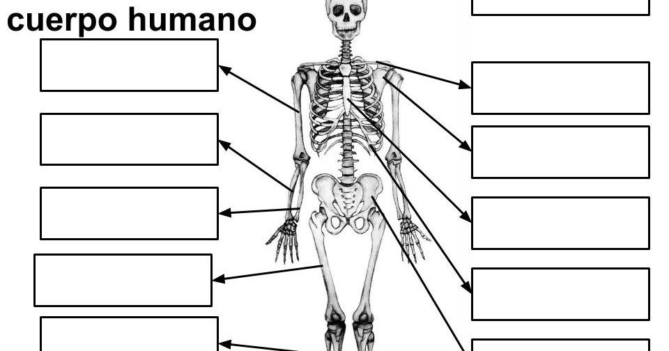Maestra de Primaria: Los huesos y los músculos del cuerpo. El ...