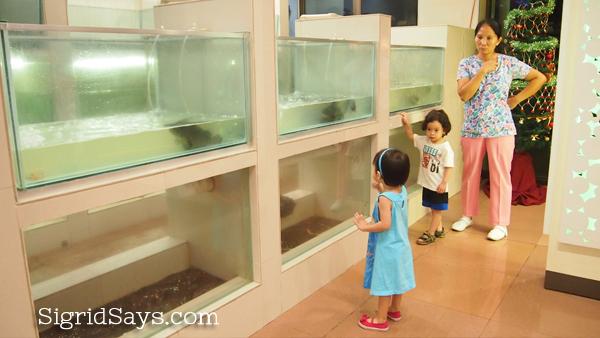 fresh seafood aquarium