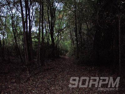 Nel buio del bosco un fantastico single-track di terra e foglie autunnali