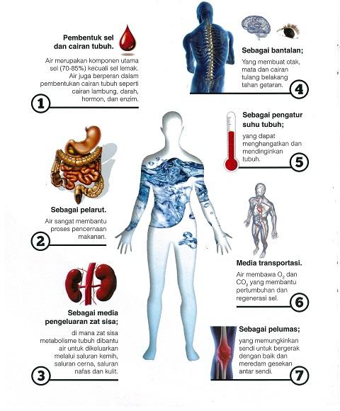 Info Kesihatan buat badan kita