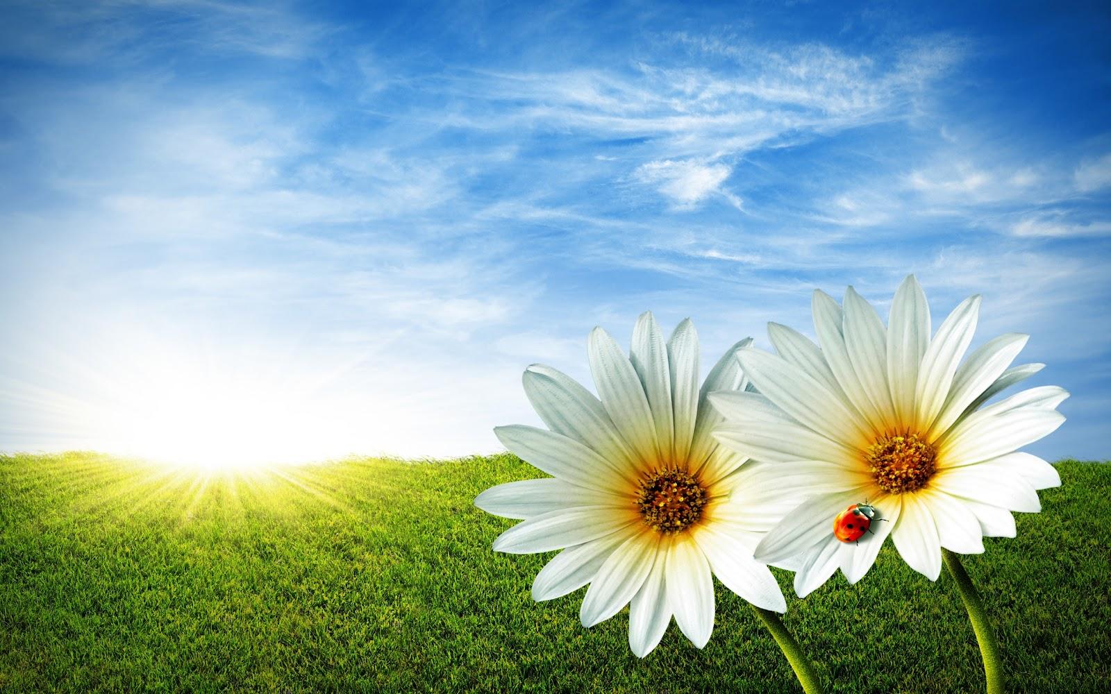 Hd Flower Backgrounds: Flowers For Flower Lovers.: HD Flowers Wallpapers