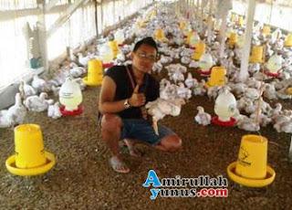 Ternak Ayam Potong