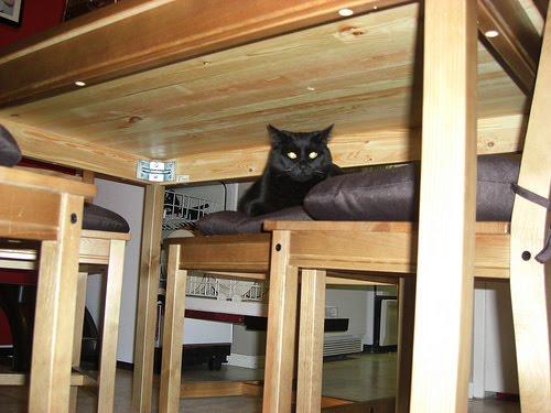Gambar Gambar Lucu Kucing Yang Lagi Bersembunyi
