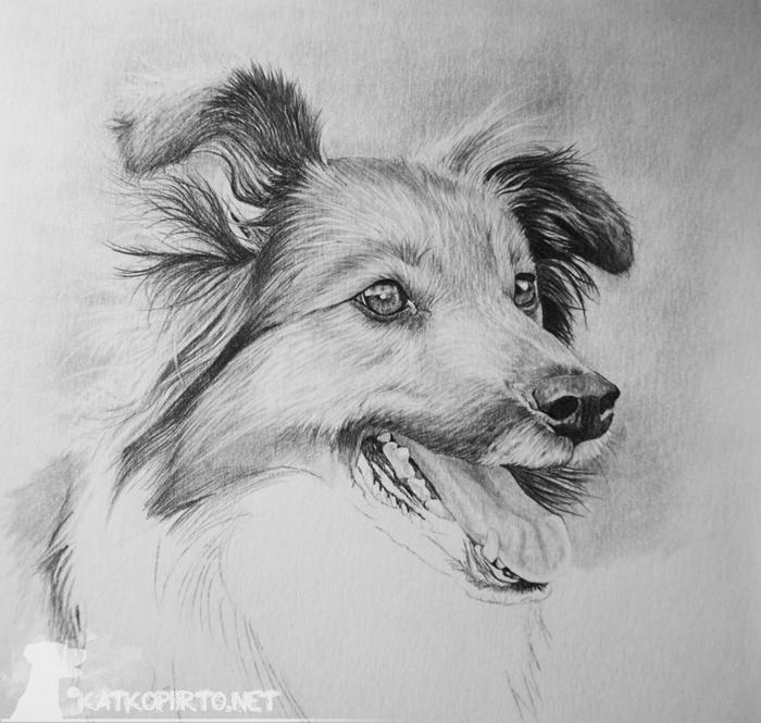 Koira Värityskuva