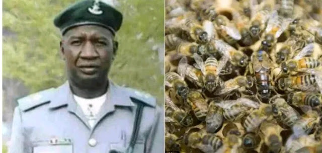 Customs officer killed by bees in Lagos
