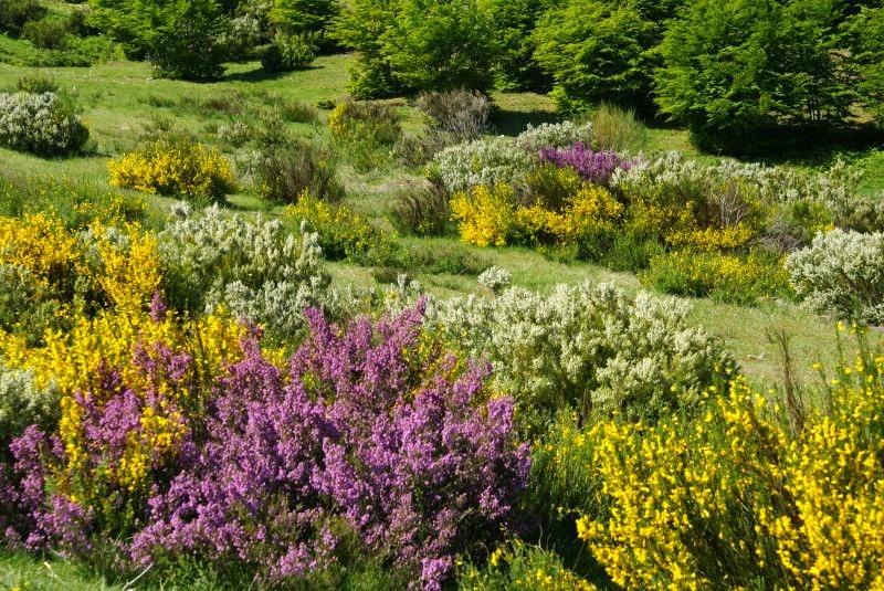 De Flores En La Montana: Un Paraíso En La Montaña Central Leonesa: Otras Flores