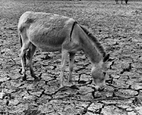 Desertification via RTCC.org