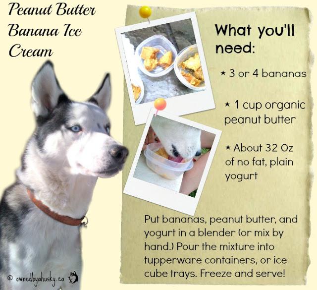 Banana ice cream for dogs