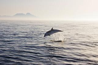 Delfines Estrecho Gibraltar
