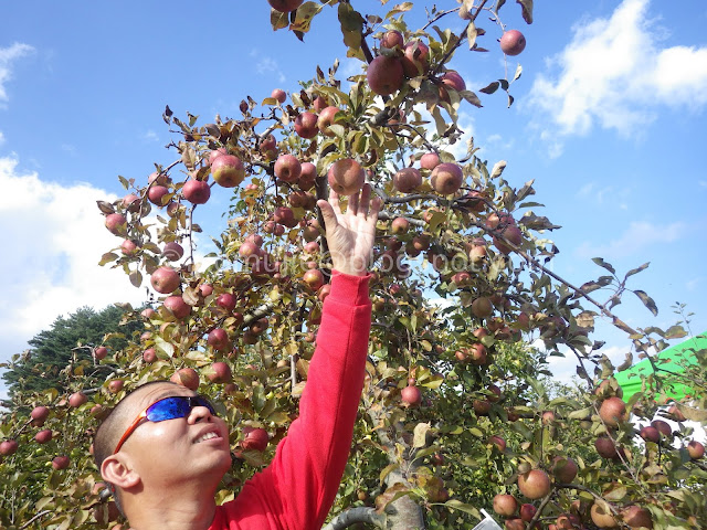 Fushoushan Farm apple picking