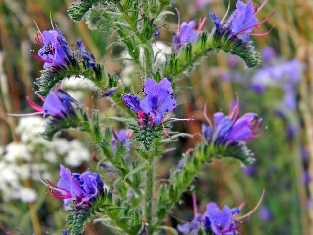 kwiaty, zioła, natura, lato