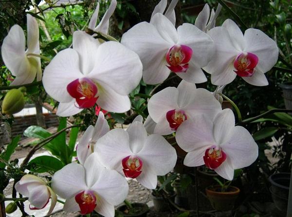 Koleksi Gambar  Berbagai Macam Bunga  Anggrek