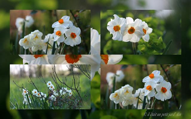 fleur blanche coeur orange