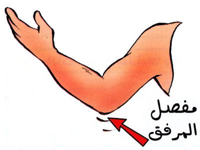 الأجزاء الرئيسية لجسم الإنسان