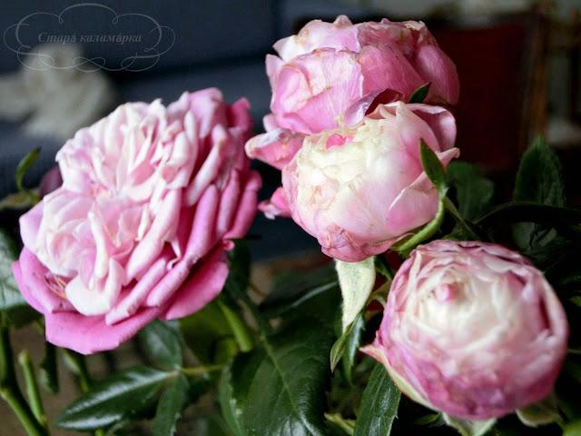 розы, розарий, сочетания роз, розы в саду
