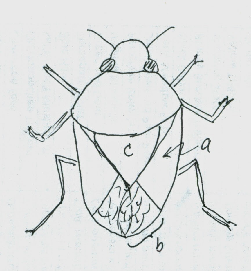 Nature Rambling: What is a true bug?