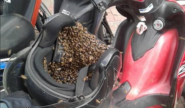 Waspada Saat Akan Menggunakan Helm, Bisa Jadi Hewan-hewan Mengerikan Ini Ada Dalam Helm Anda