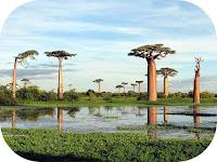 Cerca Viaggi per Madagascar