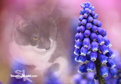 They Call Me The Hyacinth Cat