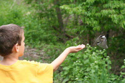 Chickadee landing on William's hand ~ Royal Botanical Garden :: All Pretty Things