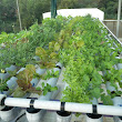 Hydroponic Automation System Completed