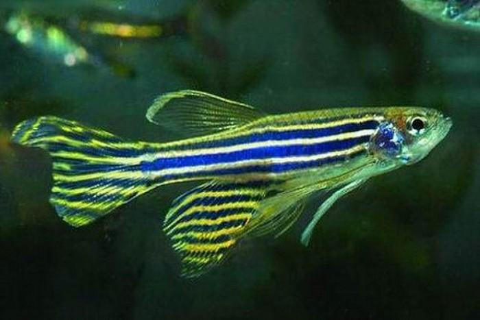 Lựa chọn một số loại các cảnh nhỏ phù hợp cho bể cá trong nhà